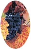 Advanced Viticulture and Enology Training Workshop Slated May 7